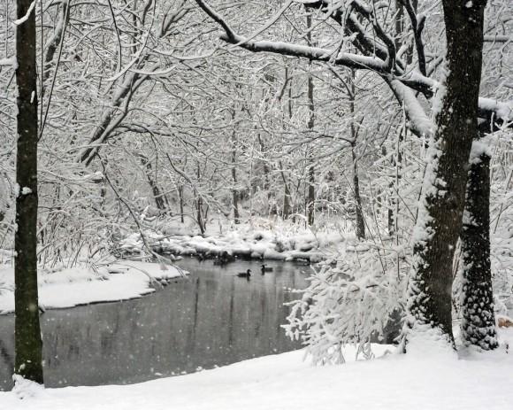 snow-day-17