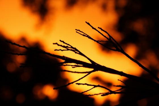 sunset-19