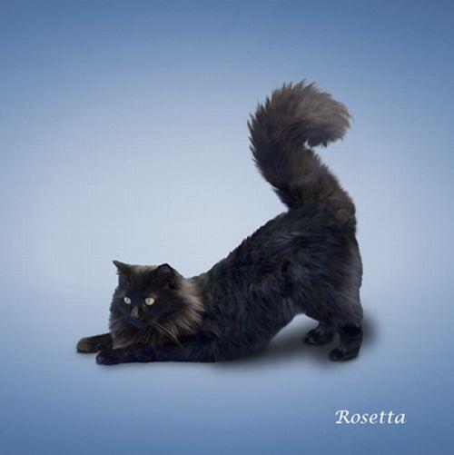 yoga-cat-03