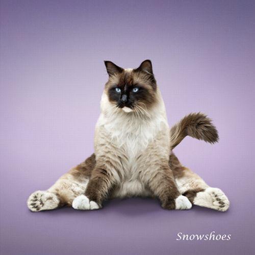 yoga-cat-07