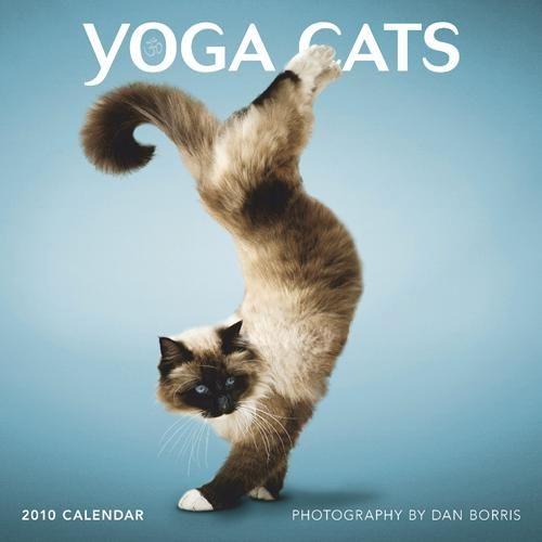 yoga-cat-09