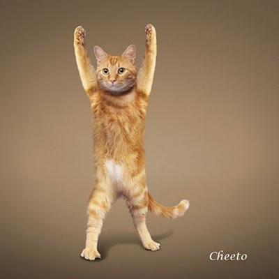 yoga-cat-11