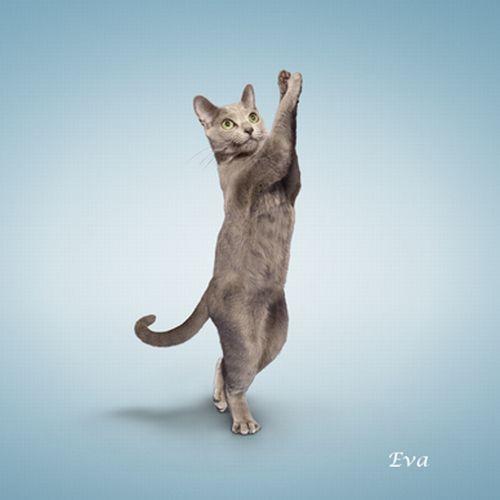 yoga-cat-12