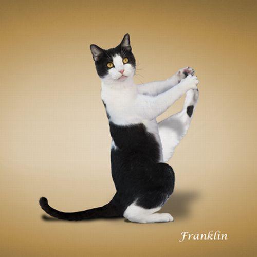 yoga-cat-13