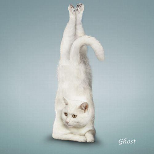 yoga-cat-14